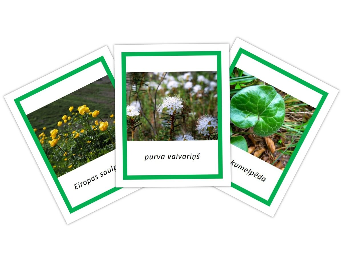 Indīgie augi Latvijā II