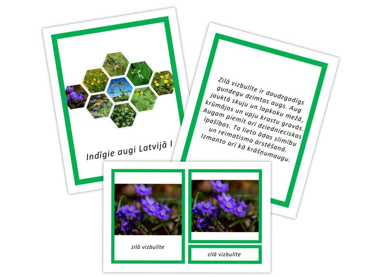 Komplekts - Indīgie augi Latvijā I