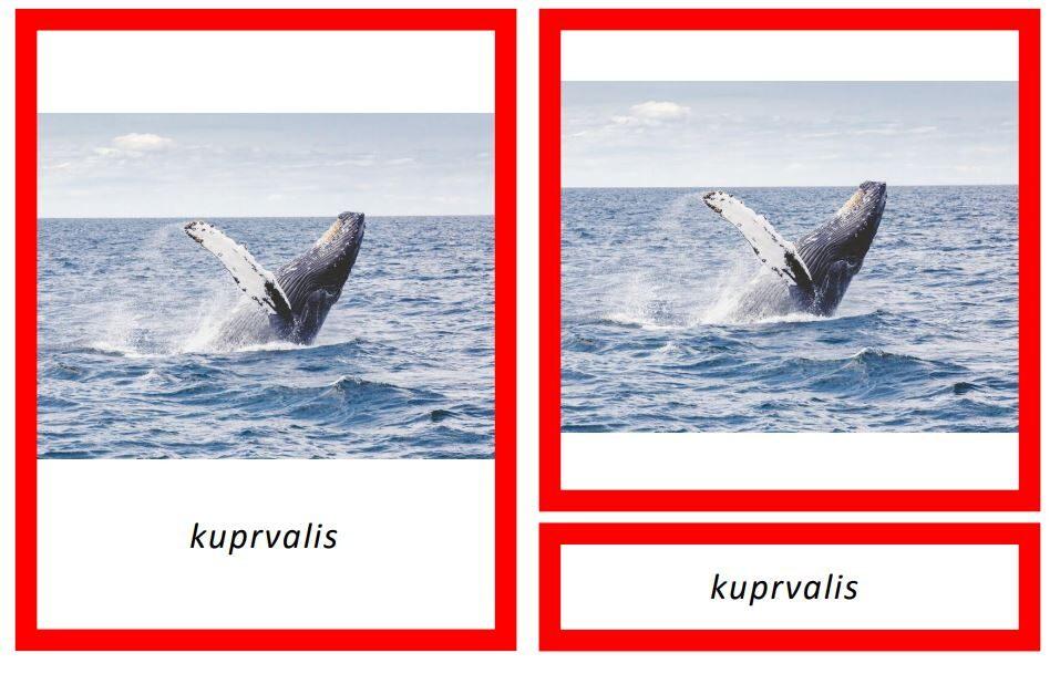 Dzīvnieki Antarktikā