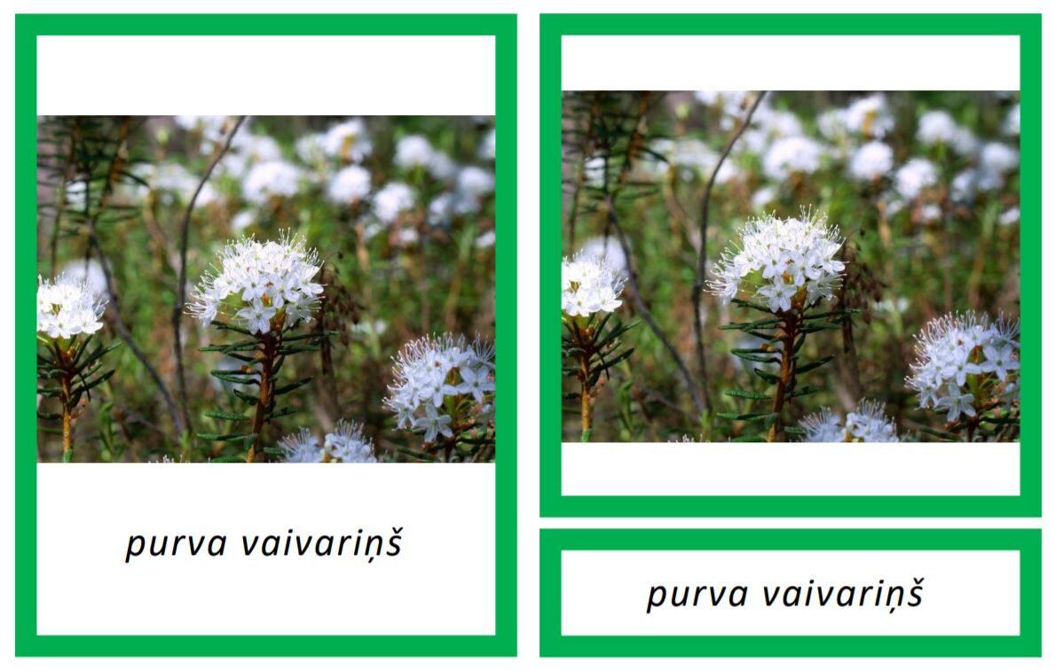 Komplekts - Indīgie augi Latvijā II