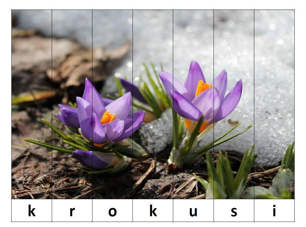 Puzle - Pavasara ziedi - saliec vārdu