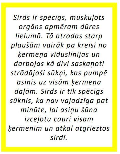 Komplekts - Cilvēka iekšējie orgāni