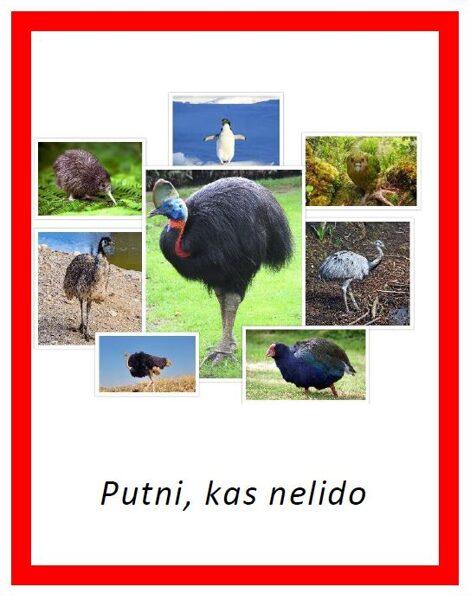 Putni, kas nelido