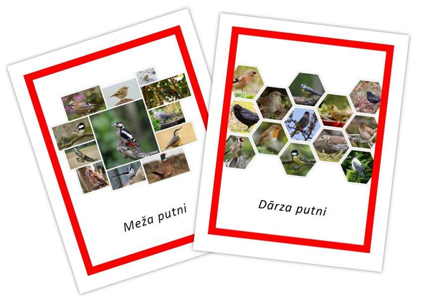 Komplekts - Dārza + meža putni